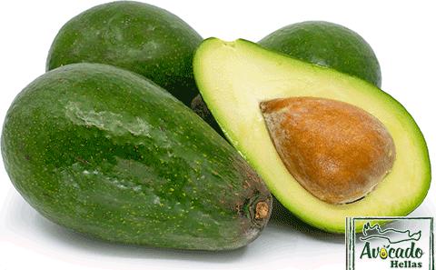 Aβοκάντο Κρήτης Zoutano , avocado ζουτανο τιμή Χανια