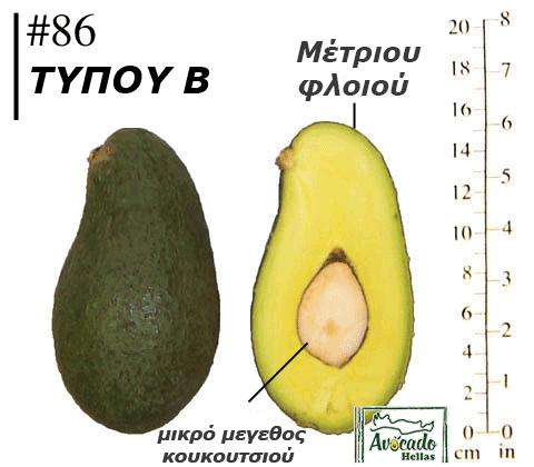 Ποικιλία Αβοκάντο (Avocado) #86 χανιά κρήτης Ελλάδα