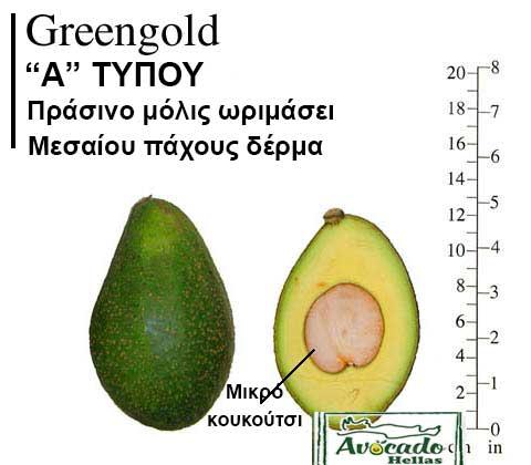 Ποικιλία Αβοκάντο Κρήτης GreenGold
