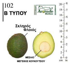Αβοκάντο Κρήτης 102 ( Avocado 102)